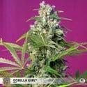 Gorilla Girl (Sweet Seeds) feminisiert