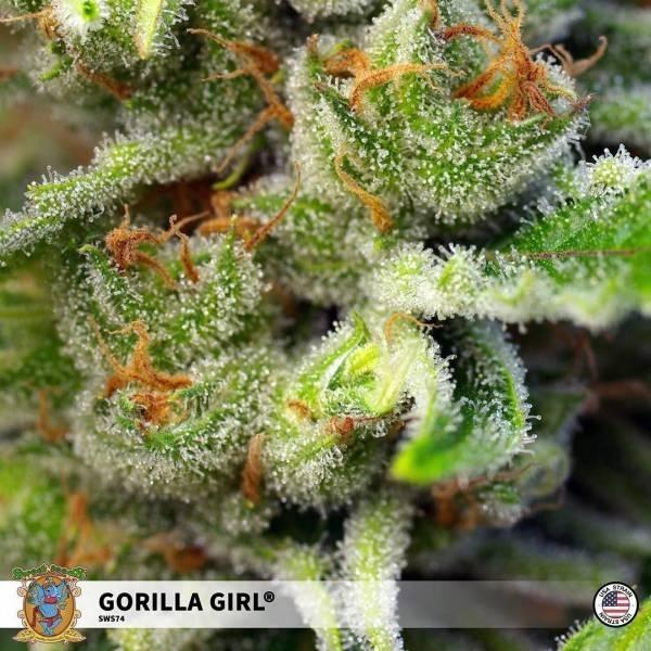 Gorilla Girl feminisiert (Sweet Seeds) - Zamnesia