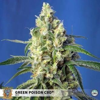 Green Poison CBD (Sweet Seeds) feminisiert