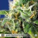 Honey Peach Auto CBD (Sweet Seeds) Feminized