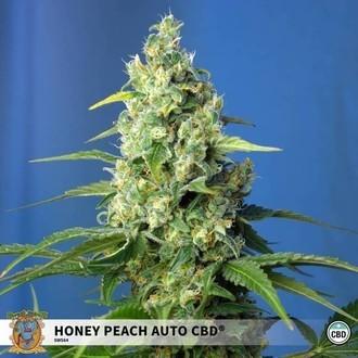 Honey Peach Auto CBD (Sweet Seeds) feminisiert