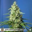 Honey Peach Auto CBD (Sweet Seeds) Femminizzata