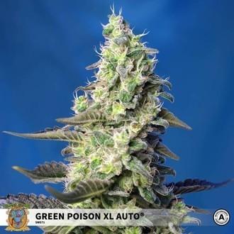 Green Poison XL Auto (Sweet Seeds) feminisiert