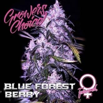 Blue Forest Berry (Growers Choice) feminisiert