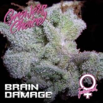Brain Damage (Growers Choice) feminized