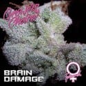 Brain Damage (Growers Choice) Femminizzata
