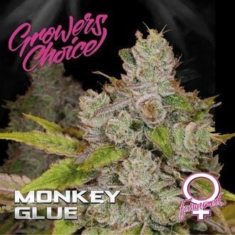 Monkey Glue (Growers Choice) feminisiert