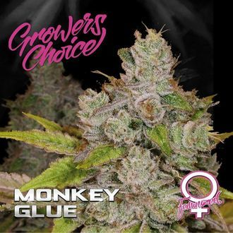 Monkey Glue (Growers Choice) Feminized