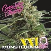 Monsterbud XXL Auto (Growers Choice) Femminizzata