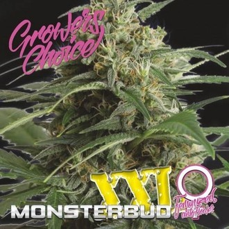 Monsterbud XXL Auto (Growers Choice) Femminizzata