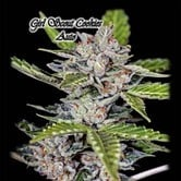 Girl Scout Cookies Auto (GeneSeeds) feminized