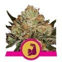 Kush Banner 3 (Royal Queen Seeds) feminized