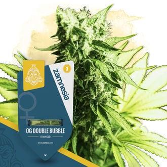 OG Double Bubble (Zamnesia Seeds) feminisiert