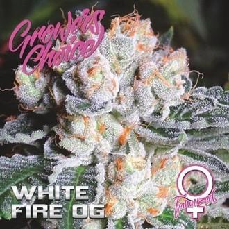 White Fire OG (Growers Choice) Femminizzata