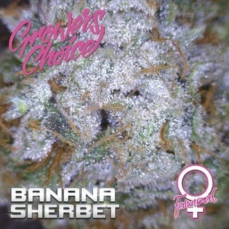 Banana Sherbet (Growers Choice) Femminizzata
