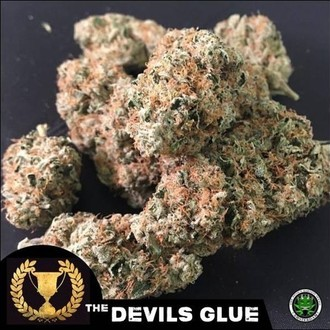 Devil's Glue (Devil's Harvest) feminisiert
