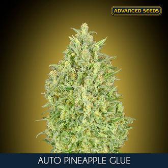 Auto Pineapple Glue (Advanced Seeds) feminisiert