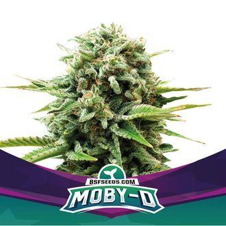 Moby-D (BSF Seeds) feminisiert