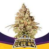 Gorilla Glue 4 (BSF Seeds) Feminized