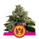 Legendary Punch (Royal Queen Seeds) feminized