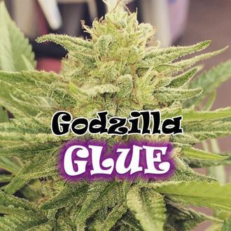 Godzilla Glue (Dr. Underground) femminizzata