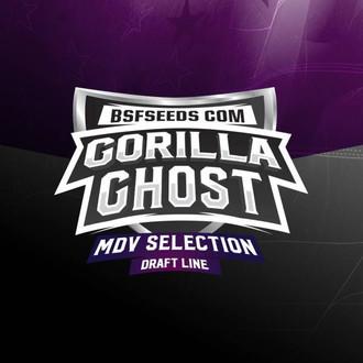 Gorilla Ghost (BSF Seeds) feminisiert