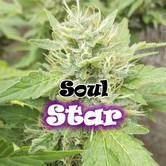 Soul Star (Dr. Underground) feminized