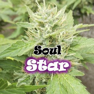 Soul Star (Dr. Underground) feminisiert