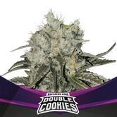 Double Cookies (BSF Seeds) feminized