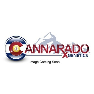 Dubble Sundae (Cannarado Genetics) feminisiert