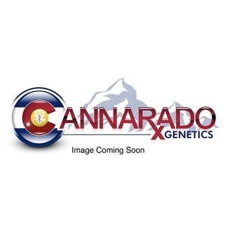 Dubble Sundae (Cannarado Genetics) feminized