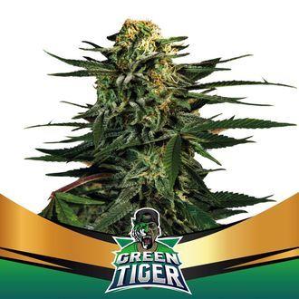 Green Tiger (BSF Seeds) feminized