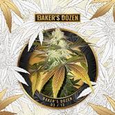 Baker's Dozen Exclusive (T.H. Seeds x Zamnesia) feminized
