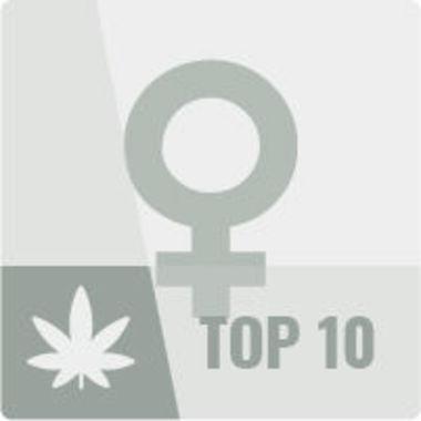 Cannabis Seeds   Biggest Assortment   Best Prices - Zamnesia