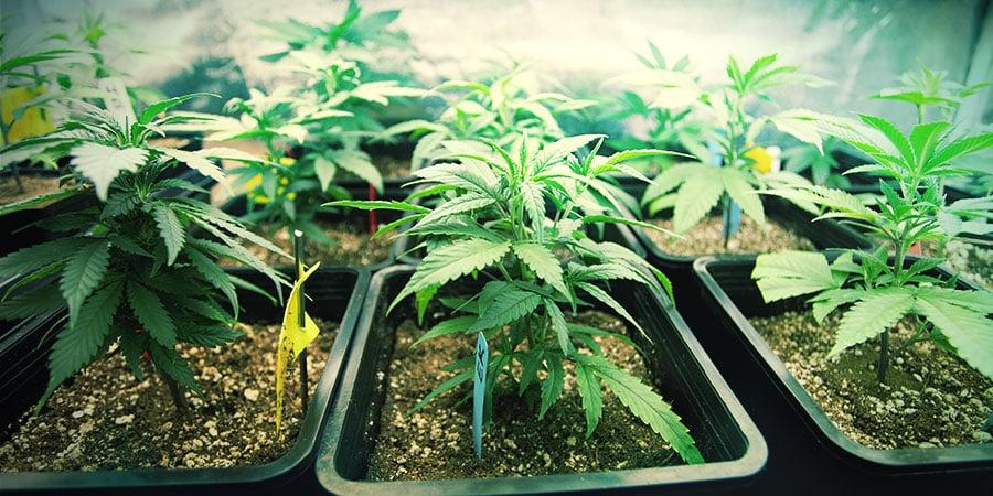Die Richtige Behältergröße Für Deine Pflanzen Auswählen