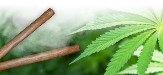 Cannabis Rauchen Blunt