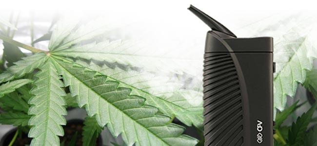 Cannabis Rauchen Verdampfer