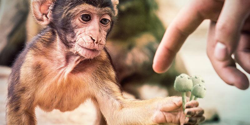 Die Stoned-Ape-Theorie könnte unsere Evolution erklären