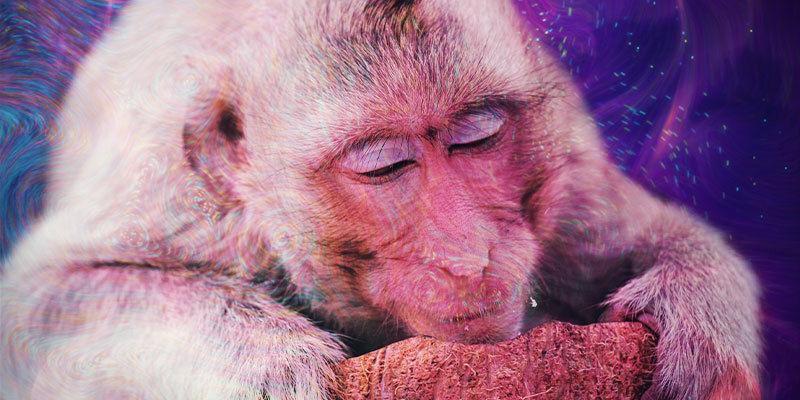 Was ist die Stoned-Ape-Theorie?