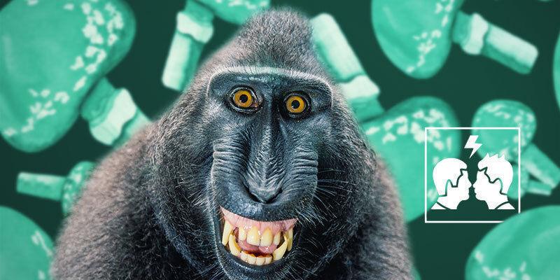 Warum ist die Stoned-Ape-Theorie umstritten?