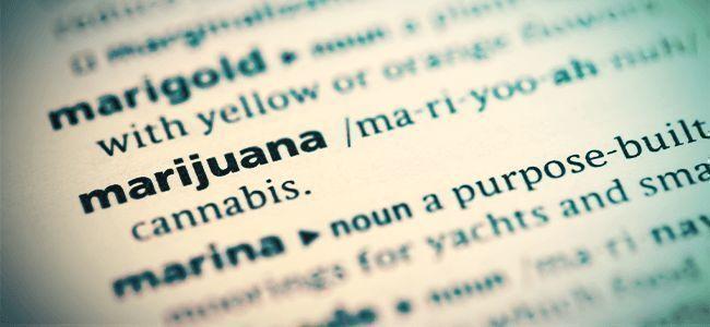 Bücher Über Cannabis
