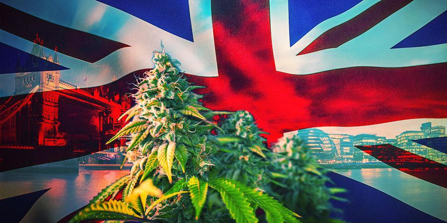 Wie Du Die Passenden Cannabissorten Auswählst UK