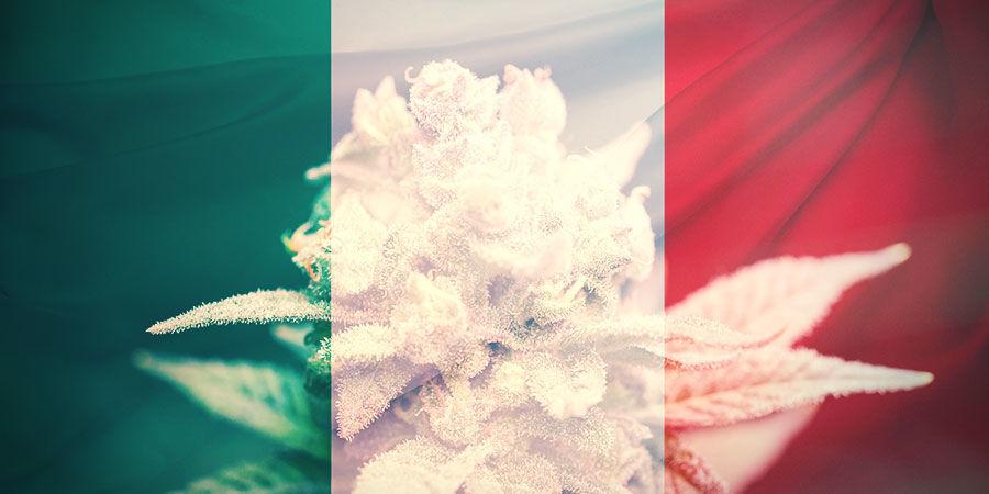 DIE WAHL DER RICHTIGEN CANNABISSORTE IN ITALIEN