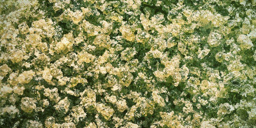 Cannabisstängeln: Bubble Hash