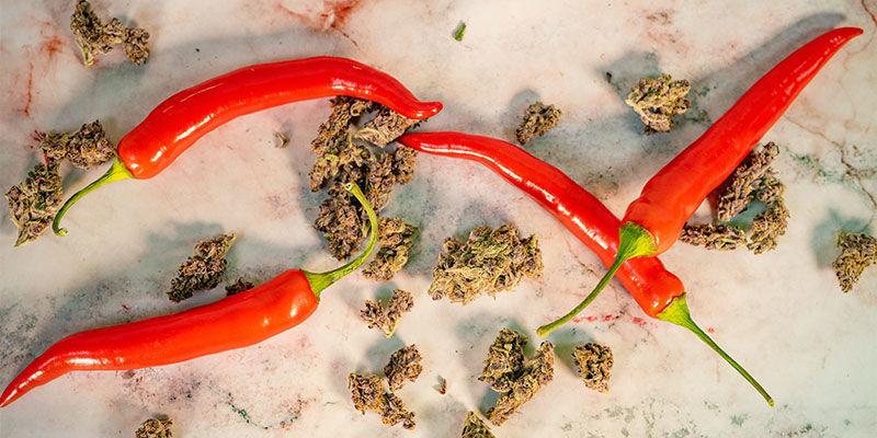 Haben Cannabispflanzen und Chilis etwas gemeinsam?