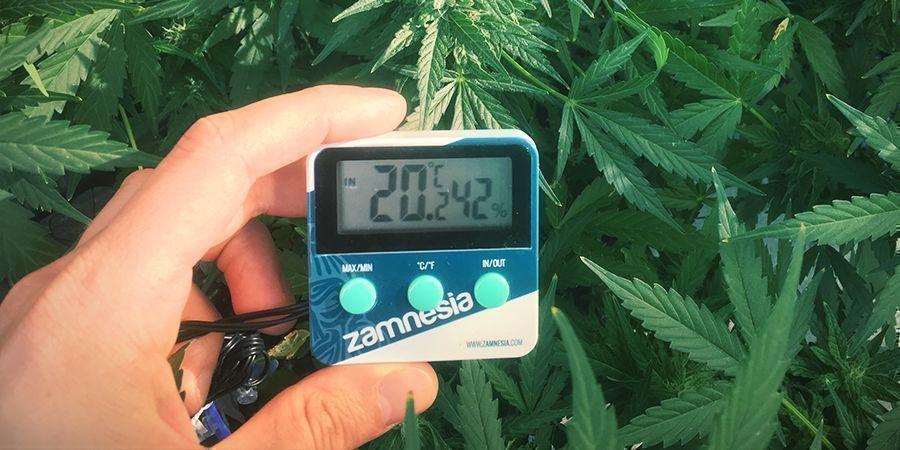 So verhindert man den Stretch von Cannabispflanzen: Halte die Temperatur unter Kontrolle