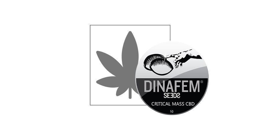 Critical Mass CBD (Dinafem)