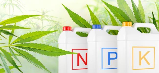 Cannabis Nährstoffe