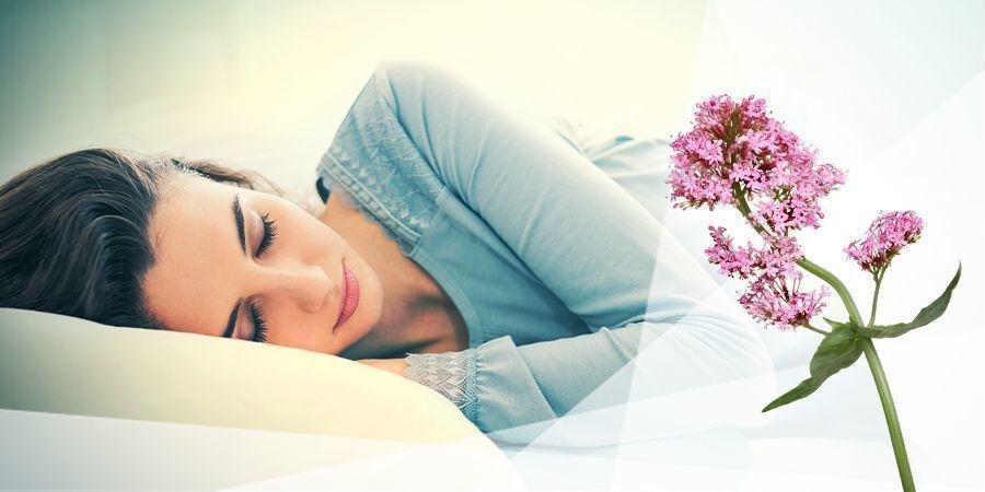 Baldrian Zum Entspannen Und Schlafen