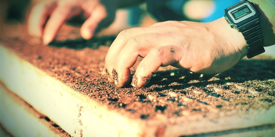 Tabak An- Und Umpflanzen